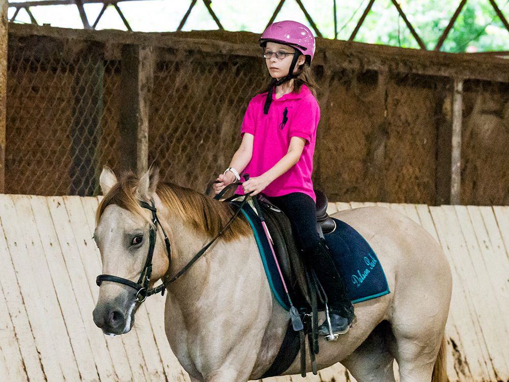Adults Horse Riding Lessons In Brisbane And Gold Coast